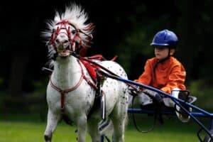 casque d'équitation pour enfant
