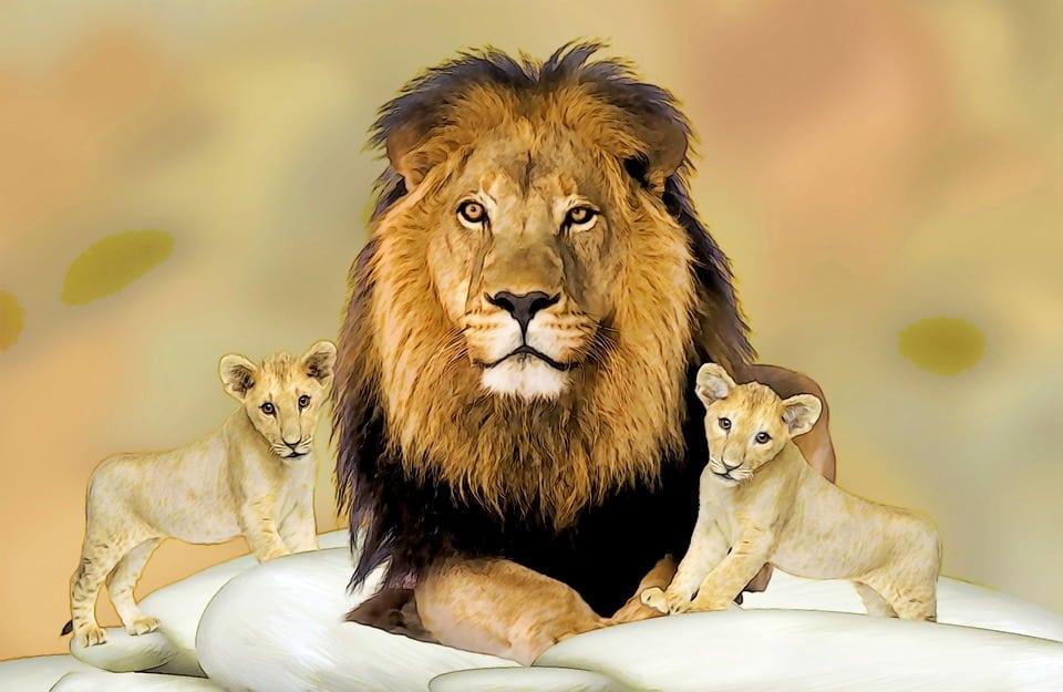 Un lion et deux lionceaux