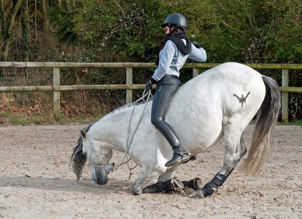 importance du grip sur le pantalon equitation pour le dressage